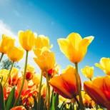 Хороскоп за пролетното равноденствие-Предстоят 3 силни дни-Най-голямото щастие предстои за тази зодия