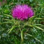 Трите билки, които са точно за такъв момент на смяна на сезоните-Незаменими са!