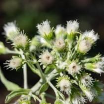 Натурални лекове срещу пролетни алергии