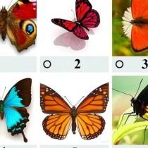 Бърз тест с пеперуди ще ви разкрие тайните