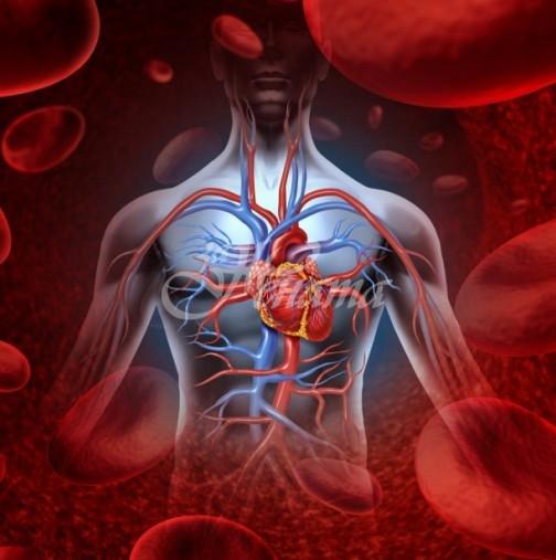 Кардиолог обясни митовете за здраво сърце и предпазване от тромби