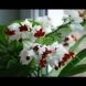 Цветето, което всеки дом заслужава: Дървото на съдбата носи щастие и любов, цъфти целогодишно, гледа се само:
