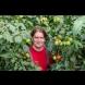 От дядо ми ги знам: Хитрините за засаждане на домати - растат над 2 метра, сочни, едри и ароматни