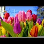 Кой празнува имен ден на Цветница