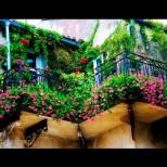 Цветен водопад - тези 15 разкошни пълзящи цветя ще направят дома ви земен рай. Гледат се лесно, растат бързо (Снимки):