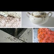 5 капки във всеки ъгъл и мравките бягат през глава - най-евтиното и безопасно средство срещу нашествениците у дома: