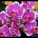 Едно единствено нещо е нужно на орхидеята ви да цъфти: