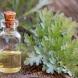 Терапия с българска билка лекува стомаха и черния дроб