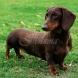 Кучетата, които откриват рак в 97% от случаите