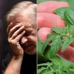 Учените посочиха кой е зеленчукът, който предотвратява рак