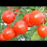 3-4 литра на квадрат - толкова стига, за да зреят доматите по-бързо и да са натежали от плод: