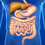 Нашето здраве в дебелото черво: 5 мощни билки ще премахнат всички проблеми
