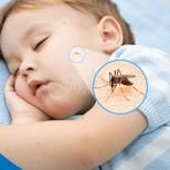 Жив комар няма да припари до вас това лято - 8 простички метода да държим кръвопийците в шах: