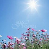 Градусите скачат до 33-Идва ли лятото-Прогноза за следващите дни