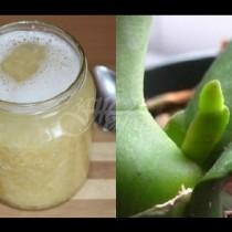 Чеснов деликатес за орхидеи: Обилен цъфтеж с най-хубавите цветове на една орхидея
