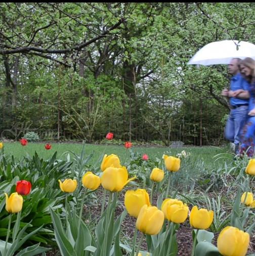 Хороскоп за днес, 15 май-Позитивно влияние и късмет очакват 2 зодии в сряда