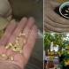 Лесно прихващане на лимон от семки у дома