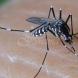 2 неща, които консумирате са магнит за комари-Нападат ви, веднага като усетят