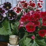 2 рецепти за захранки и обилен цъфтеж на цветята-Като започнат да цъфтят, ще си кажете