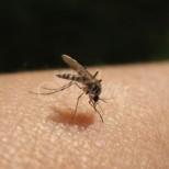 Домашни средства срещу комари, които наистина действат