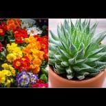Нежните убийци в дома ни - ако имате деца и домашни любимци, отървете се от тези цветя у дома: