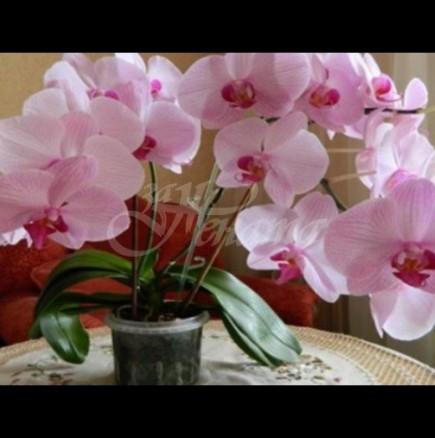 Цветето, което притежава необикновена енергия да предсказва съдбата и да ви предипреждава за опасности