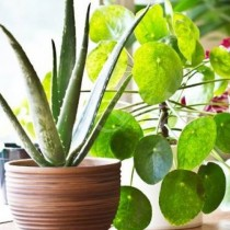 5 домашни цветя, които внасят положителната енергия в дома ви и с нея парите и благоденствието