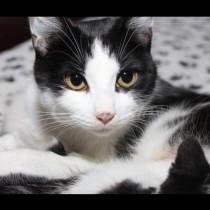 Жена изпра котката си в пералнята-Ето какво се случи!