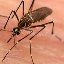Българският град с най-ужасните комари, които могат да превърнат престоя ви в кошмар