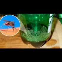 Най-ефикасният капан за комари се прави за 5 минути от бутилка - залагате го вечерта, сутринта броите жертвите вътре:
