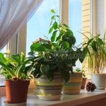 6 растения за дома, които премахват влагата и мухъла! Спешно спасяват от алергии и астма!