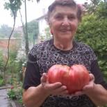 Ето колко тежи доматът-гигант на баба Мария