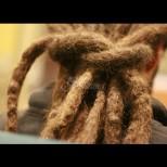 Мъж не е мил и подстригвал косата си от 40 години по заръка на Бог! Ето как изглежда днес (Снимки):