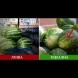 5 ключови белега, които издават идеалната диня - вече няма да ви пробутват зелен плод с вкус на тиква: