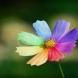 Цветето, което изпълнява желания-Само трябва да си изберете листче и да изречете нещо специално