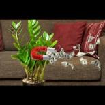 4 зелени магнита за пари у дома - растенията, които ще ни направят богати, ако ги засадим вкъщи: