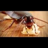 Сигурна смърт за хлебарките - пригответе им тази смъртоносна хапка и повече няма да ги видите в дома си: