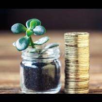 3те стайни растения, които МОЩНО привличат пари в къщата!
