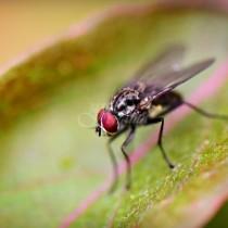 Изненадващо ефективен начин за защита от мухи