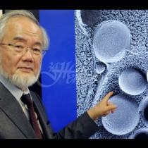 Японски биолог получи Нобелова награда за метода си на пречистване на тялото от токсини