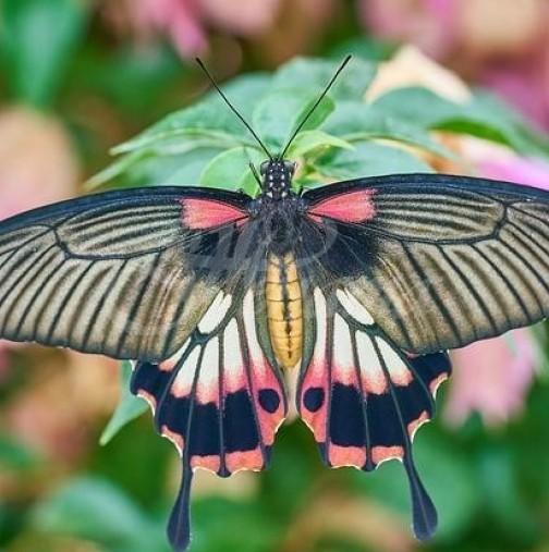 Любовен хороскоп за периода от 19 до 23 август-Романтика и пеперуди в корема за 3 зодии