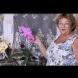 Много хора знаят да отглеждат орхидеи, но малко са онези, които ги карат да цъфтят толкова дълго-Ето как го прави тази жена!
