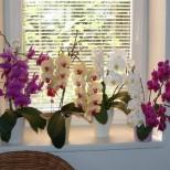 Как да накарате орхидеята да цъфти – СЕДЕМТЕ правила на орхидеистите и не спира да цъфти през цялата година!