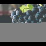 10 причини да ядете грозде всеки ден, особено ако имате такива заболявания