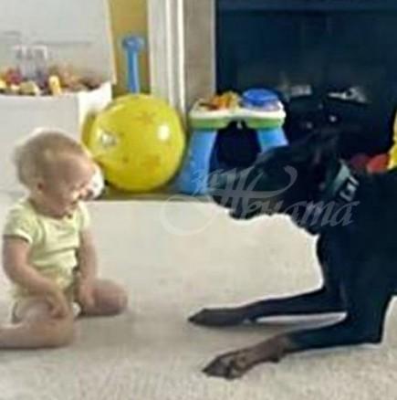 Както си играеше с бебето, кучето изръмжа и се втурна към него, захапа го за памперса и ето какво се случи!