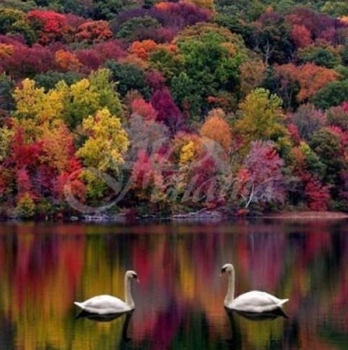 Хороскоп за днес, 8 септември-Една от зодиите ще се наслади на любимите си същества