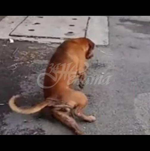 Куче се преструва, че е със счупен крак, за да му даде някой храна