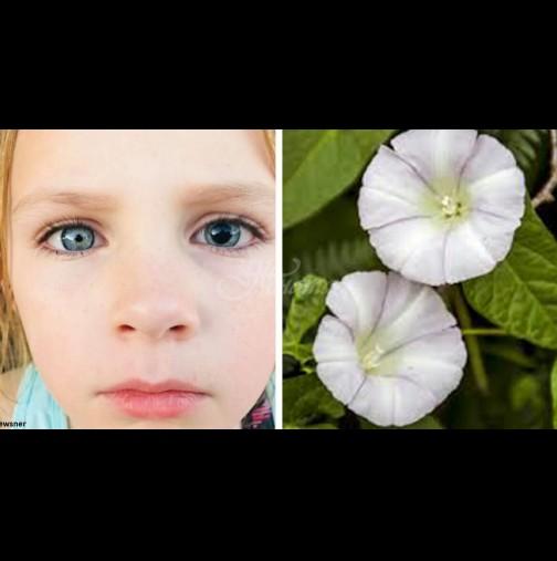 Малко момиченце увреди зрението си при игра с това цвете - родители, пазете децата си от него: