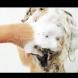 Цял живот мием неправилно косата си
