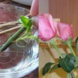 Как да си отгледаме роза от букета, който са ни подарили- 3 изпитани метода за пускане на корени